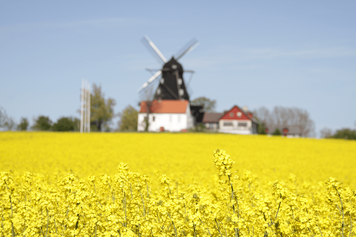 Windmill on the Swedish Countryside